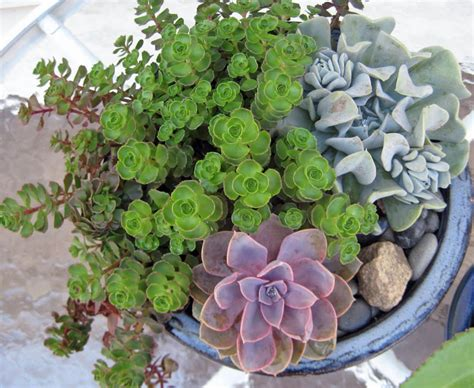 succulent house pin succulent house plants identification on pinterest