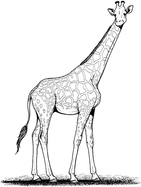 coloring page giraffe free free giraffe coloring pages