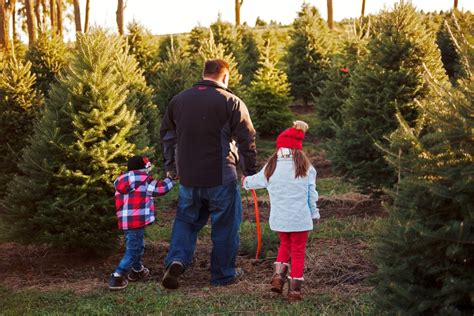 cut your own christmas tree columbus fresh trees cut your own tree cooks woods