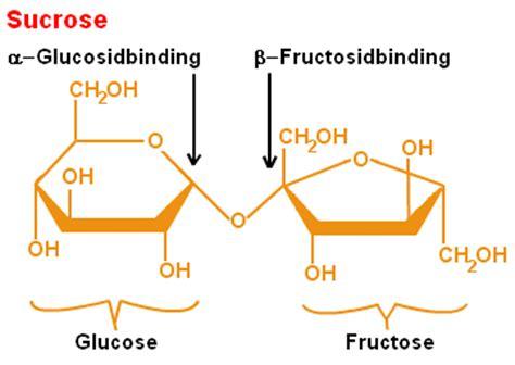 sucrose structural diagram sucrose