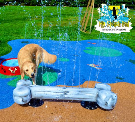 backyard dog pool dog bowl portable water play features for your splash pad