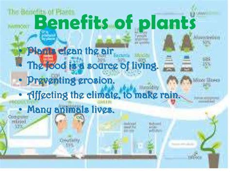 benefits of houseplants plants
