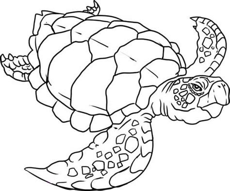 easy turtle coloring page get this easy turtle coloring pages for preschoolers 9iz28