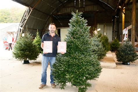 5 places to choose and cut down your own christmas tree in