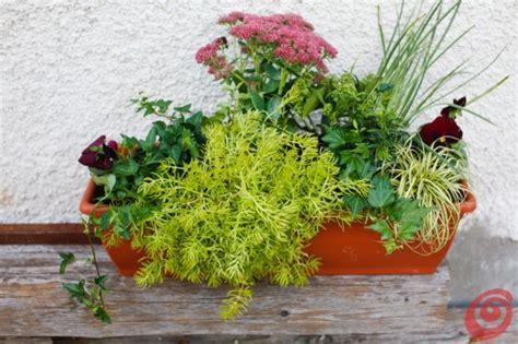 fioriere per davanzali composizioni floreali per le fioriere invernali