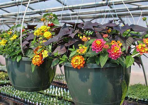 macam macam tanaman hias  penjelasannya belajar berkebun