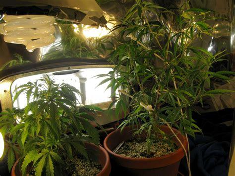 plants that grow in dark rooms 100 plants that grow in dark rooms aeroponics grow