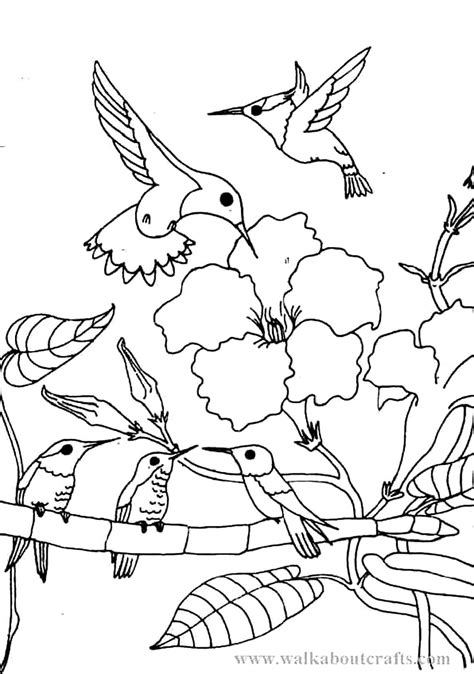 coloring book pictures to print printable hummingbird coloring pages coloring me