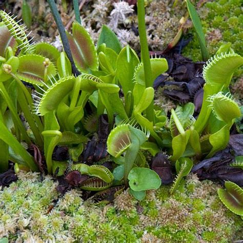 best 25 carnivorous plants ideas on pinterest exotic