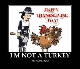 Funny Pictures About Thanksgiving Funny Thanksgiving Pictures Happy Thanksgiving Pictures