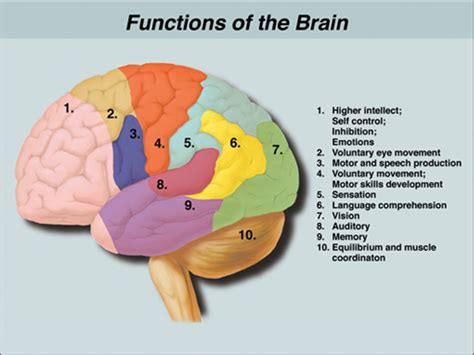 stay a brain bleed a in the balance a story books shaft sports shaft report hockey players battle