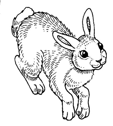 hopping bunny coloring page rabbit hopping drawing www pixshark com images