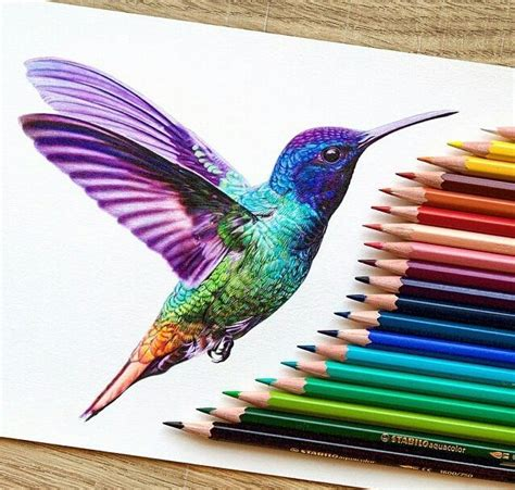 25 best ideas about hummingbird drawing on how to draw birds bird sketch and bird