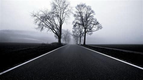 wallpaper black road black white tree road hd wallpapers