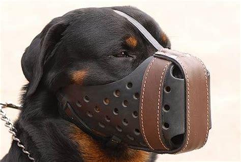 rottweiler muzzle leather muzzle dondi style for rottweiler m55 m55 1073 leather muzzle