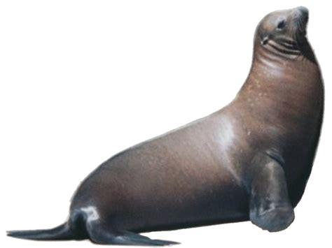 sea lions    sf zoo baghdad   bay