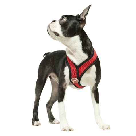 comfort dog harness com gooby choke free x frame soft harness with