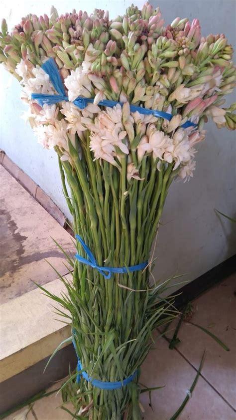 bunga sedap malam harga   budidayanya tukang
