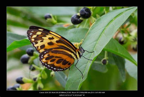 butterfly world lights butterfly world lights 28 images butterfly light jvr
