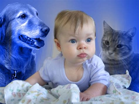 can cats and dogs babies cats and babies and dogs www pixshark images galleries with a bite