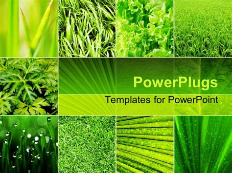 Powerpoint Template Lots Of Tiles Showing Diffeent Green Plants With Different Leaf Shapes 18871 Agriculture Powerpoint Templates