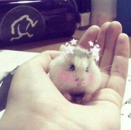 pin  maria trujillo  hamster snapchat filters cute