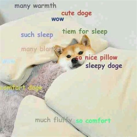 Much Doge Meme - doge will never die posts pinterest sleep much and