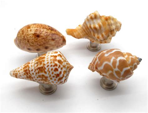 knobs shell knobs cabinet knobs set of 4 shell cabinet