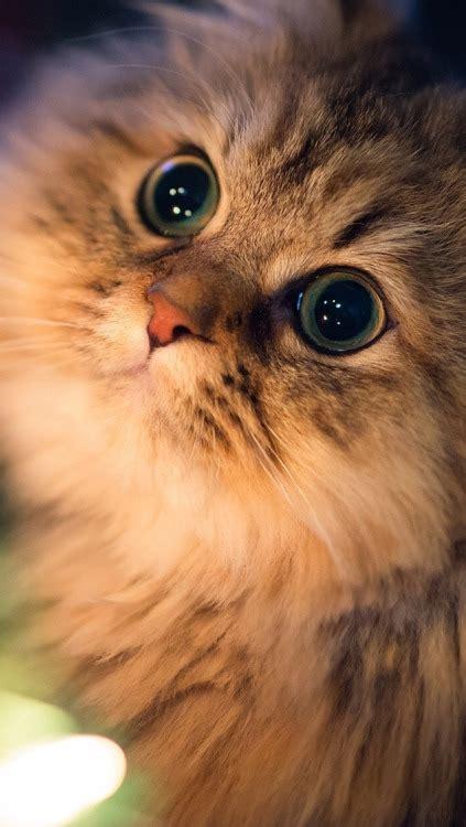 meow cat wallpaper tumblr