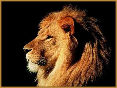 imagenes abstractas de leones fotos de leones hermosos archivos imagenes de leones