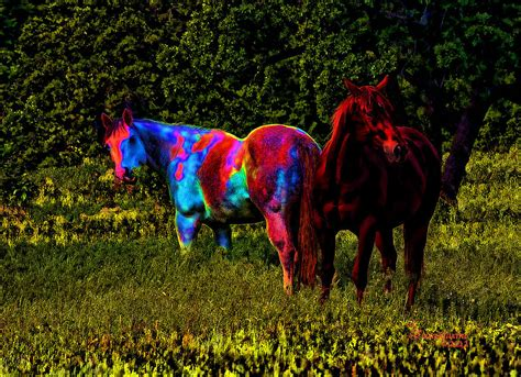 are horses color blind color blind photograph by ericamaxine price