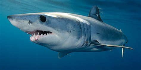 film barat ikan hiu seberapa cepat ikan hiu berenang