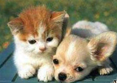 kittens vs puppies kittens vs puppies which are more sickeningly adorable topic bomb