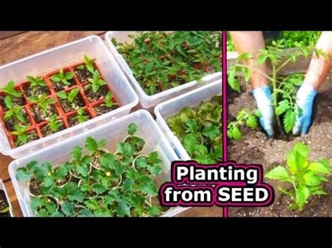 How To Start Tomato Seed Germinate Vegetable Plant Seeds When To Plant Seeds For Vegetable Garden