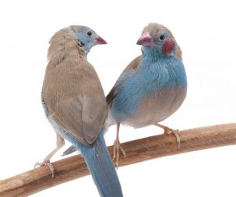 finches as pets lovetoknow