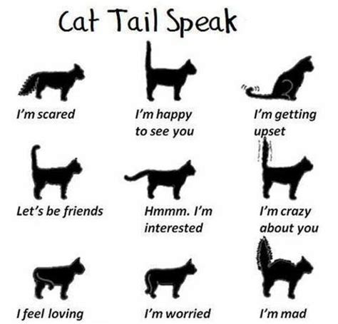 straight talk about curves cornered cat cat tail tales meow barkers