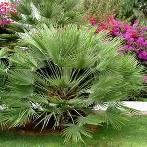 palmier plantes et jardins