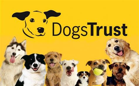dogs trust dogs trust tell parents in wales be smart