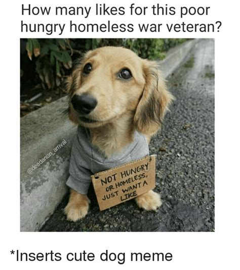 Cute Pet Memes - how many likes for this poor hungry homeless war veteran