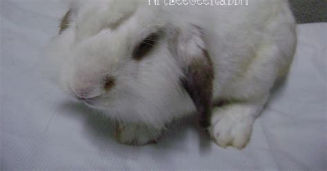 Paperline Lop Putih No 104 nm baka arnab untuk dijual