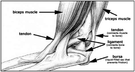 elbow pain benching 5 tips to manage elbow pain from weight lifting builtlean