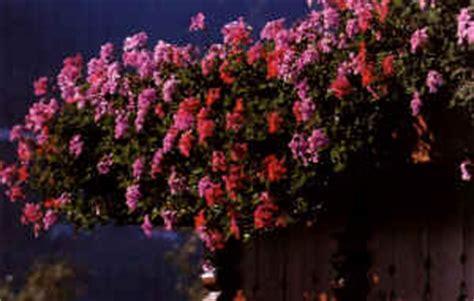 piante da terrazzo esposto a nord balcone esposto a nord