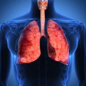 Ramucirumab Also Search For About Lung Cancer