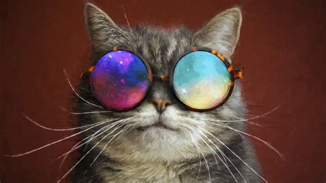 cat glasses party cool painting   hd wallpapers hd wallpapers id