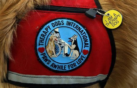 best therapy dogs best therapy dogs more than just play fetch