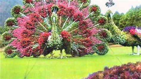 Lalbagh Botanical Gardens 800 Best Images About Garden On Pinterest Hedges Pathways And Container Gardening