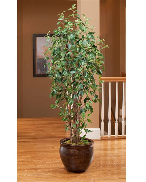 Vase With Marbles Value Priced 7 Greenhouse Artificial Ficus Tree At Petals