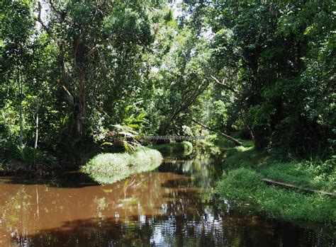 hutan lindung sungai sei wain kebun raya kota balikpapan