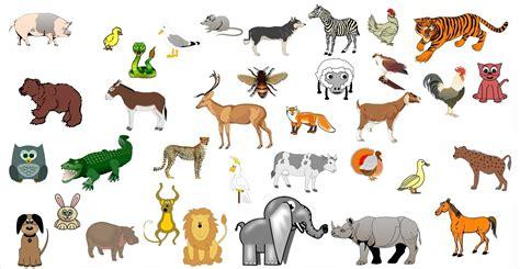 imagenes de animales salvajes para niños los sonidos de los animales para ni 241 os de 1 a 5 a 241 os