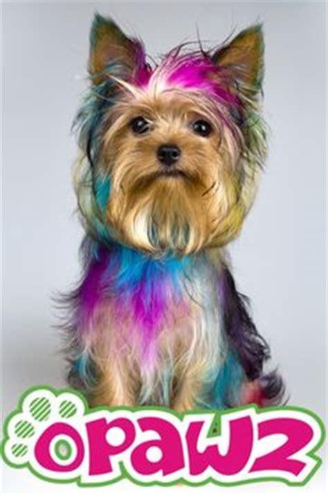 yorkie hair dye pet hair dye pet glitter gel styling gel spa salt for pet grooming opawz